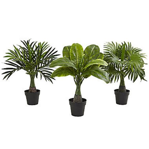 Areca, Fountain & Banana Palm Set Of 3