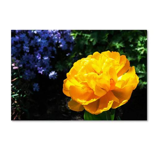 Kurt Shaffer 'Yellow Double Headed Tulip' Canvas Art [option : 22x32 Wrapped Canvas Art]