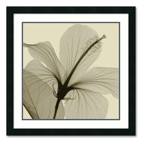 Steven N. Meyers Hibiscus Framed Art Print