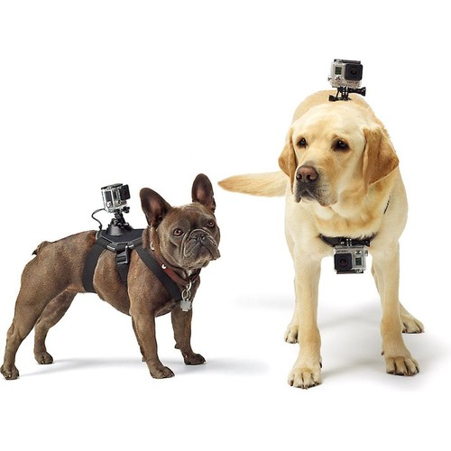 GoPro Fetch Dog Harness Accessory harness mount for GoPro HERO cameras