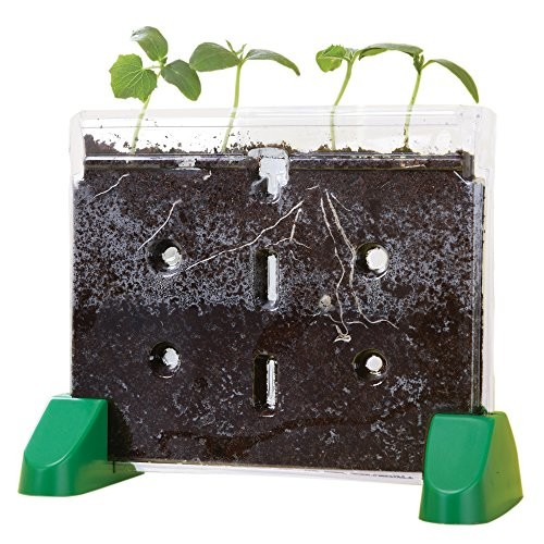 Educational Insights Sprout & Grow Window [1]