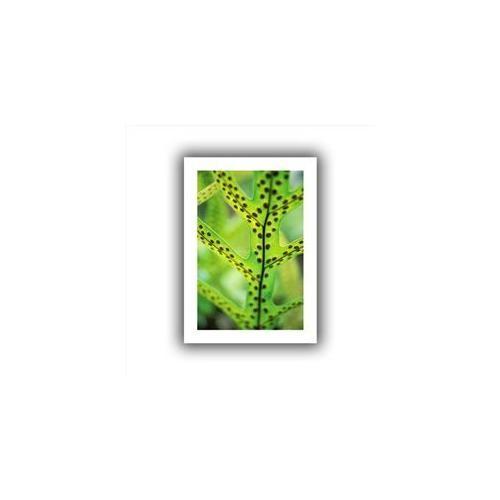 Artwal Hawaiian Lauae Fern Unwrapped Canvas Art by Kathy Yates, 12 x 18 Inch