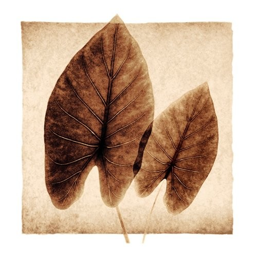 Evive Designs Taro Leaves by Michael Mandolfo Photographic Print