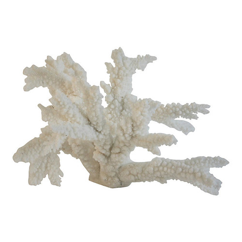 Natural Branch Coral Specimen