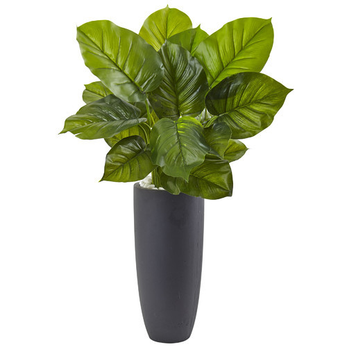 Large Leaf Philodendron Plant in Planter