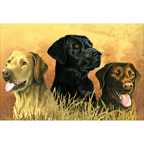 Reeves 12-Inch by 16-Inch Paint by Number Artists Collection, Labs in Marsh [Labs in Marsh]