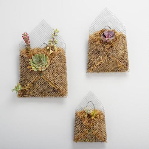 Live Succulent Trio in Mesh Planters Set of 3