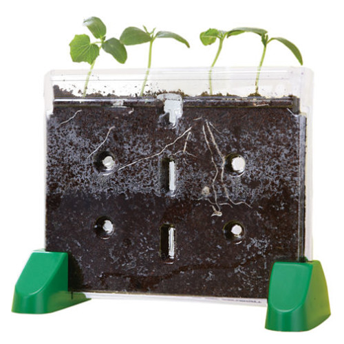 Educational Insights Sprout & Grow Window