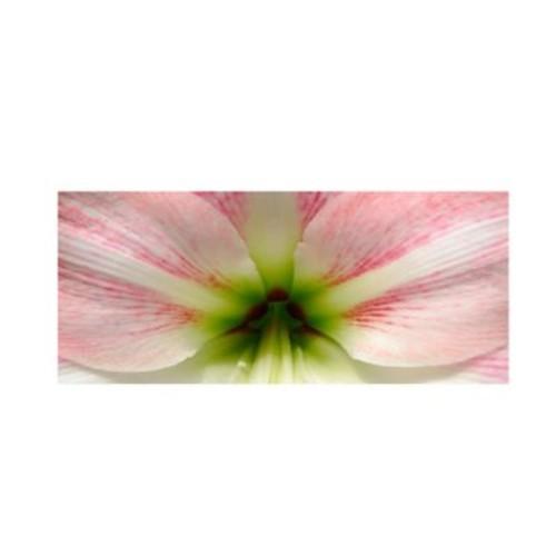 Trademark Fine Art 'Amazing Amaryllis'