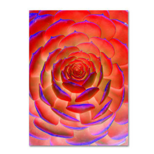 Trademark Global 'Plant Art' by Patty Tuggle Photographic Print on Canvas Size: 24