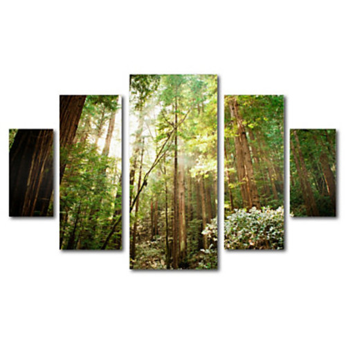 Trademark Global Muir Woods Multi-Panel Gallery-Wrapped Canvas Print By Ariane Moshayedi, 39 5/8