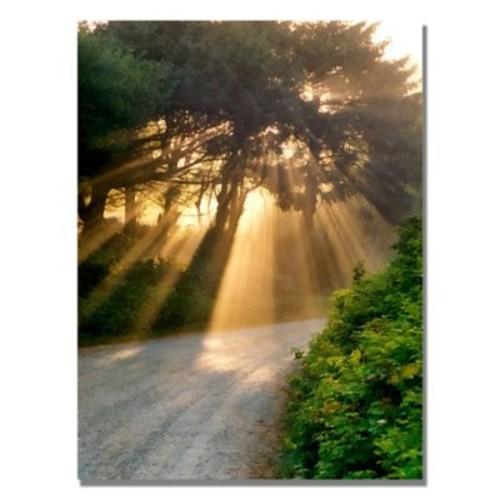 Trademark Fine Art Michelle Calkins 'Sunlight Through Trees' Canvas Art