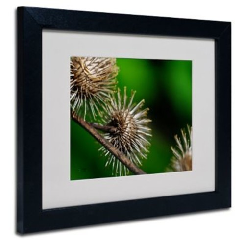 Trademark Fine Art 'Prickly'