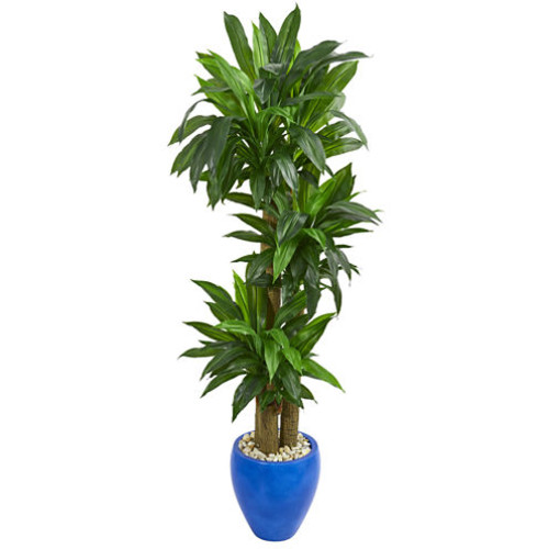 6 Cornstalk Dracaena Artificial Plant in Blue Planter (Real Touch)