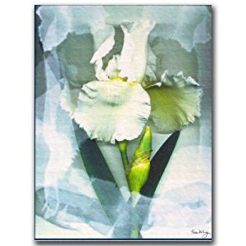 Sheer White Iris by Kathie McCurdy, 14x19-Inch Canvas Wall Art [14 by 19-Inch]