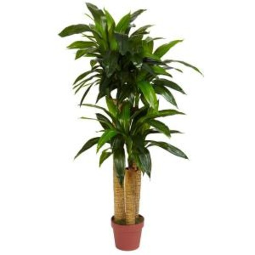 Nearly Natural Real Touch 4 ft. Green Corn Stalk Dracaena Silk Plant
