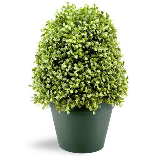 Boxwood Tree with Round Plastic Pot