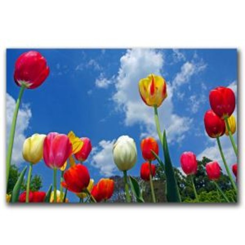 Trademark Fine Art 32 in. x 22 in. Heaven Canvas Art