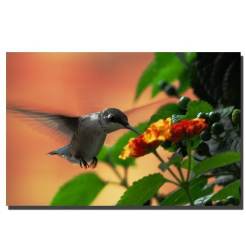 Hungry Hummingbird by Kurt Shaffer, 16x24-Inch Canvas Wall Art [16 by 24-Inch]