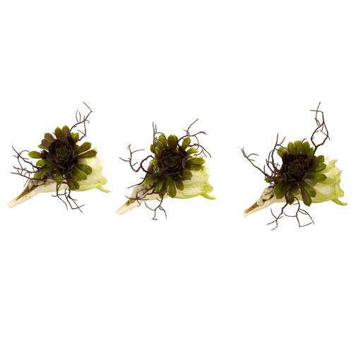 Wispy Succulent w/Seashell (Set of 3)