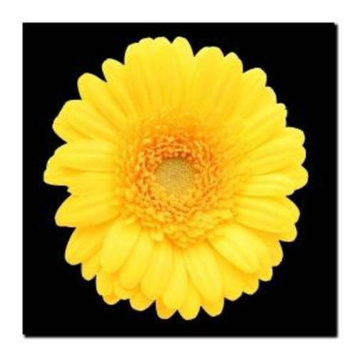 24 in. x 24 in. Yellow Gerber Daisy Canvas Art