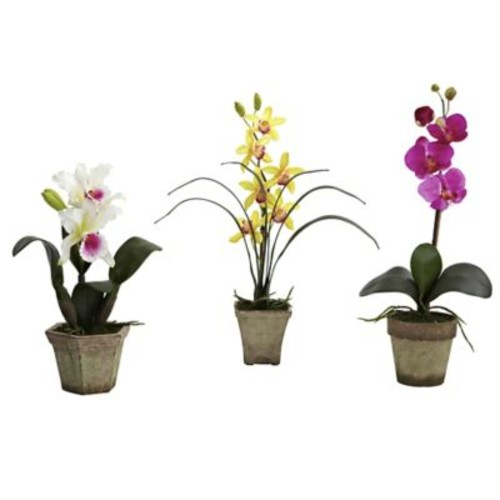 August Grove Potted Orchid Mix (Set of 3); White/Yellow/Purple