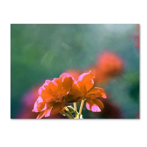 Trademark Fine Art 'Flowers & Sun' 35