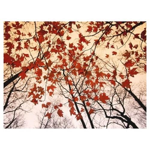 Art.com Red Maple and Autumn Sky by Raymond Gehman - Art Print
