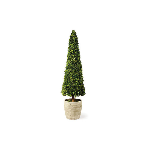 Cone Topiary, Preserved