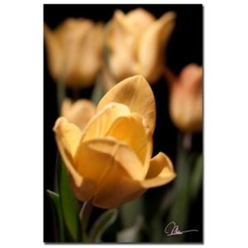 Trademark Fine Art 24 in. x 16 in. Tulips Blooms VIII Canvas Art