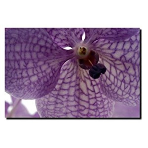 Orchid Veins by Kurt Shaffer, 18x24-Inch Canvas Wall Art [18 by 24-Inch]