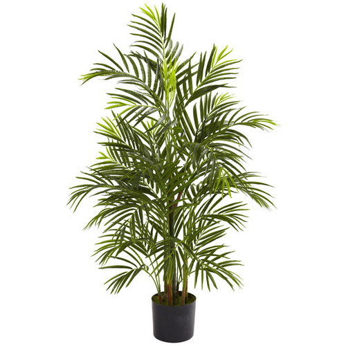 3.5-foot Areca Palm (Indoor/Outdoor)