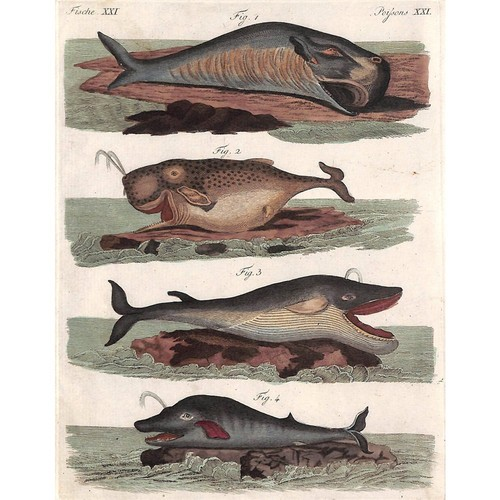 intaglio antique prints and maps Whale Engraving, 1810