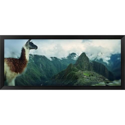 'Alpaca on Machu Picchu, Peru' Framed Panoramic Photo