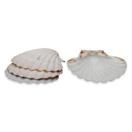 Natural Baking Shells (Set of 4)