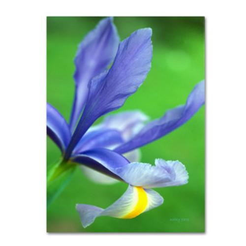 'Spring Iris' by Kathy Yates Photographic Print on Canvas