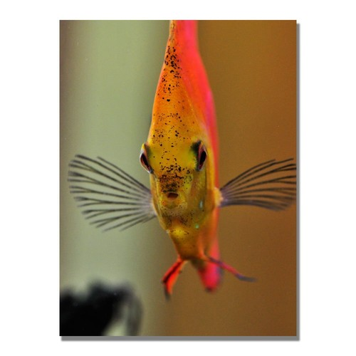 Talking with a Fish by Kurt Shaffer, 18x24-Inch Canvas Wall Art [18 by 24-Inch]