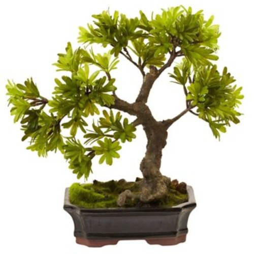 Nearly Natural Mossed Podocarpus Bonsai in Planter