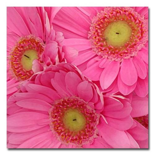 Trademark Global Amy Vangsgard 'Pink Gerber Daisies' Canvas Art