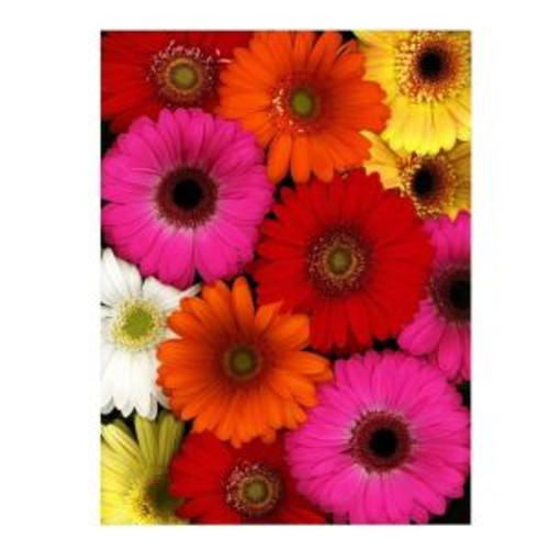 Trademark Fine Art 24 in. x 32 in. Flowers Canvas Art Ready to Hang