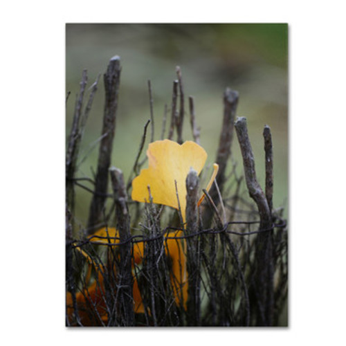 'Prisoner Fall' by Philippe Sainte-Laudy Framed Photographic Print on Wrapped Canvas