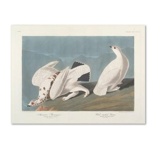 Trademark Fine Art 'American Ptarmigan' 24