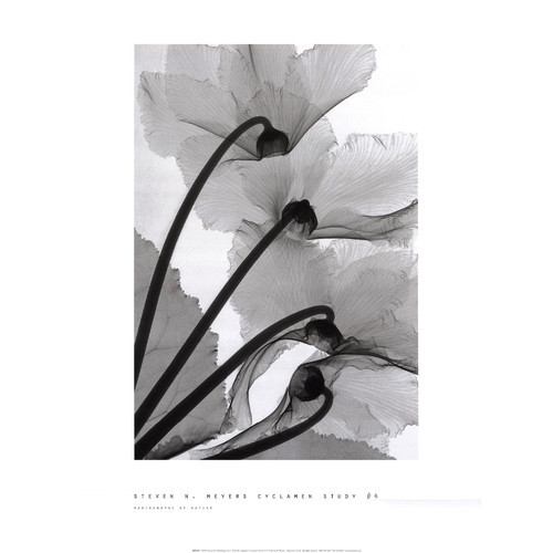 Evive Designs Cyclamen Study No.1 by Steven N. Meyers Framed Photographic Print