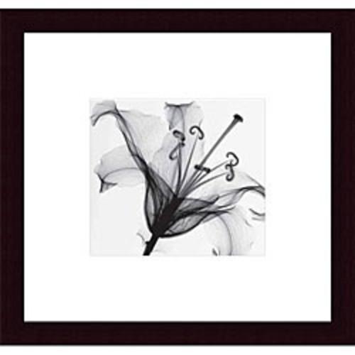 Framed Art Print 'Calla Leaf I' by Steven N. Meyers 17 x 29-inch