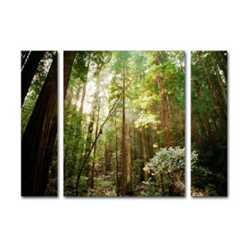 Trademark Fine Art ''Muir Woods'' by Ariane Moshayedi 30
