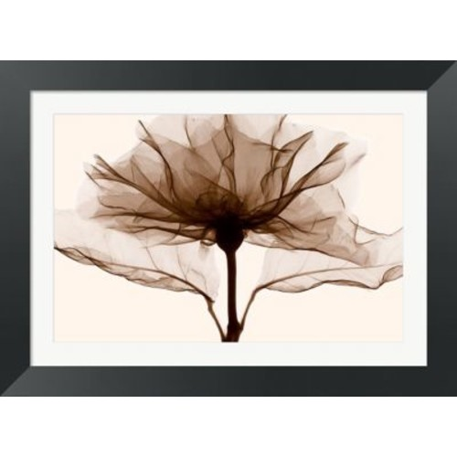 Evive Designs A Rose by Steven N. Meyers Framed Photographic Print