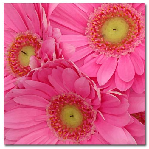 Amy Vangsgard 'Pink Gerber Daisies' Canvas Art - Multi