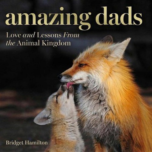 Amazing Dads : Love and Lessons from the Animal Kingdom (Hardcover) (Bridget Hamilton)