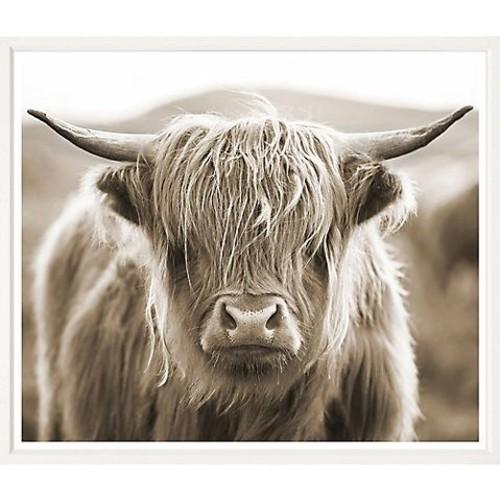 william stafford Highland Cow