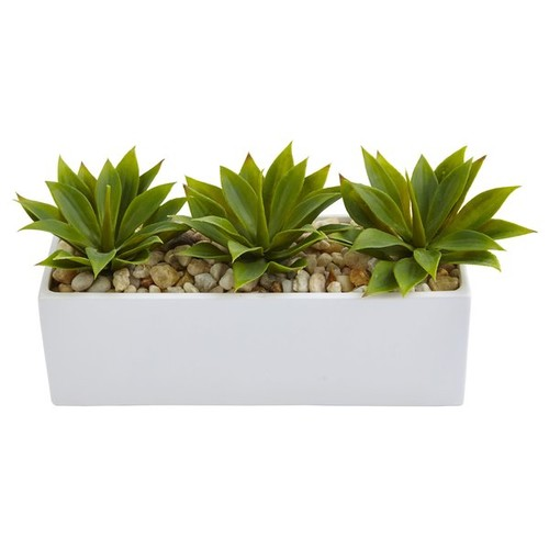 Agave Succulent Plant in Planter
